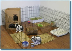 House rabbit pen indoors roomy exercise